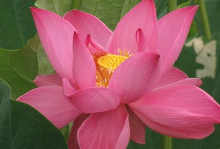 "Exploring Faith: How a Holy Spirit ""Mirror Moment"" Changed My Life: Lotus Lily (© Magi Nams)"