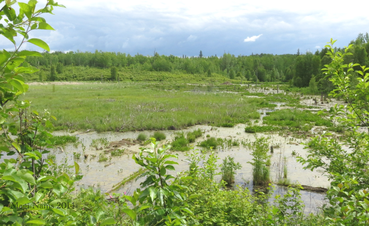 Elk Island National Park: View from Beaver Pond Trail, Elk Island National Park (© Magi Nams)