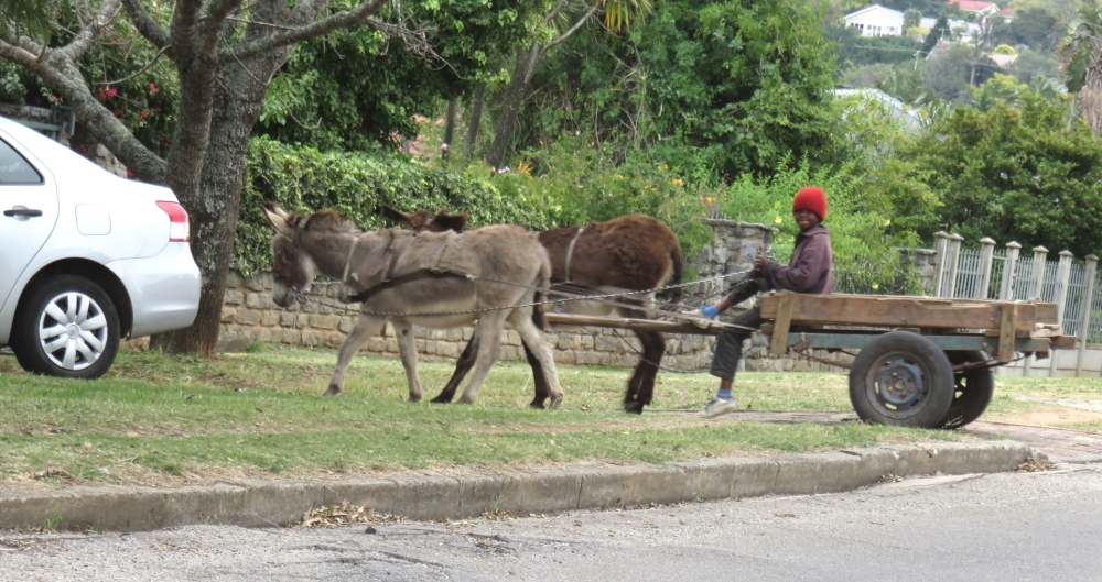 Six Months in South Africa: First Impressions of Grahamstown: Donkey Cart in Grahamstown (© Vilis Nams)