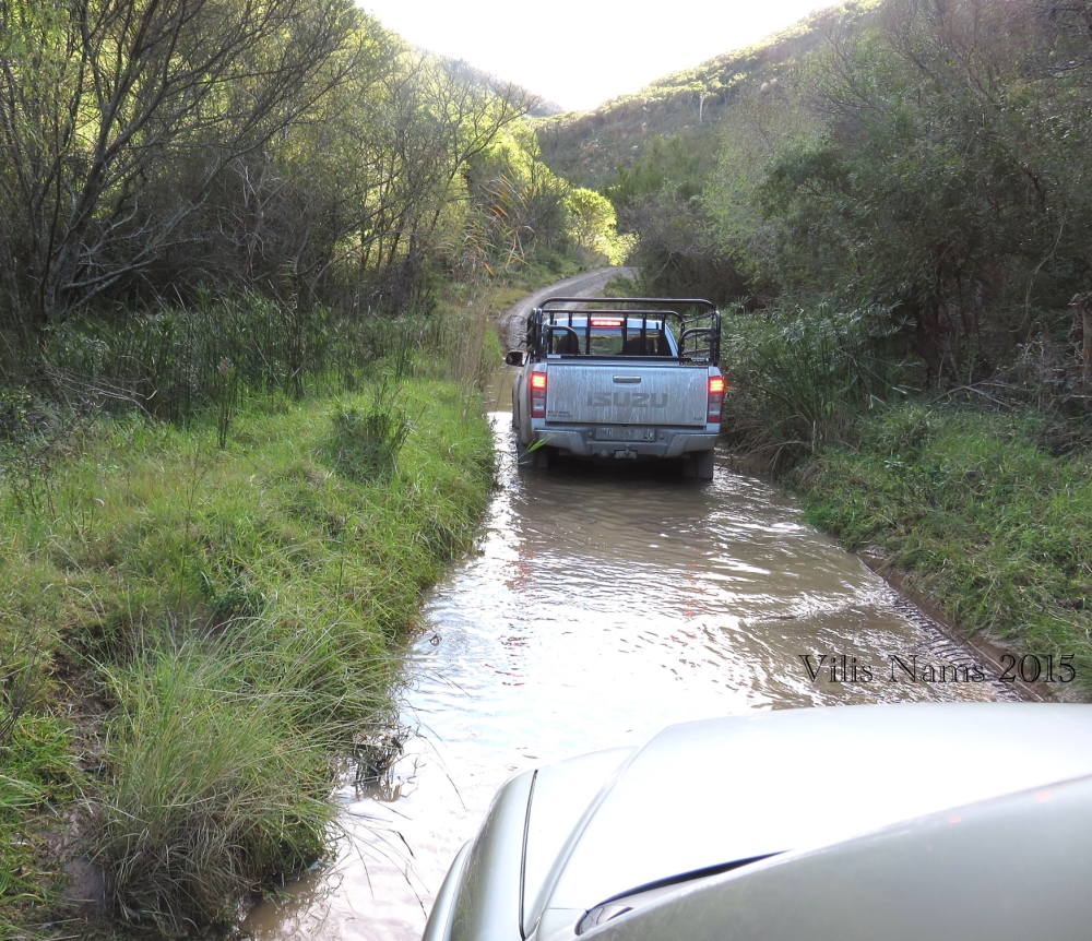 Six Months in South Africa: Birding in Frontier Country, Eastern Cape: Fording Flooded Road (© Vilis Nams)