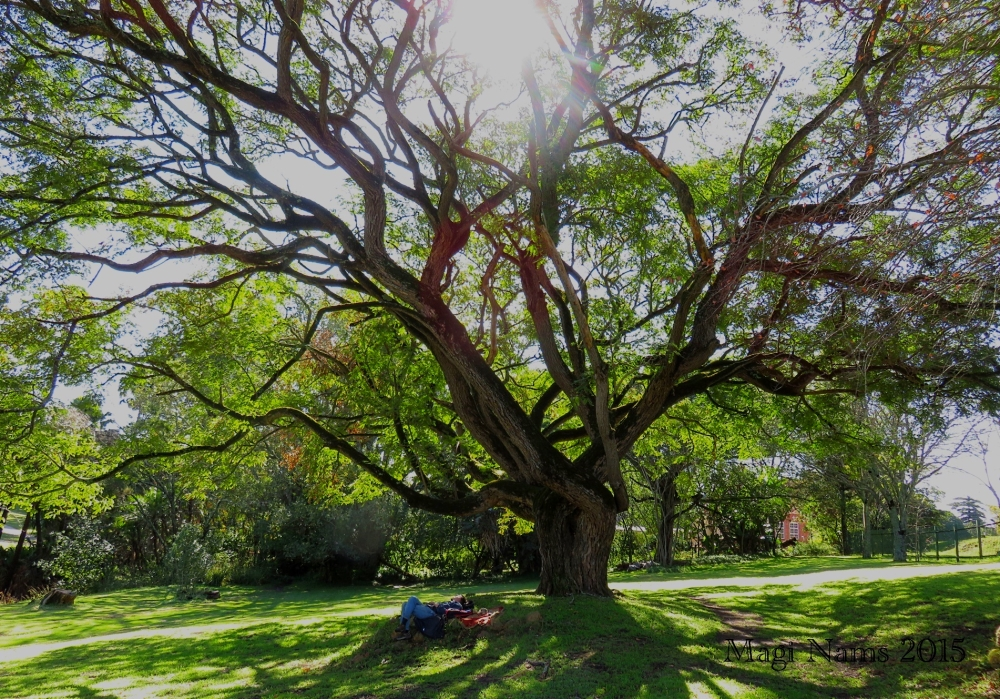 Six Months in South Africa: Makana Botanical Gardens, Grahamstown: Shady Lunch Spot in Makana Botanical Gardens (© Magi Nams)