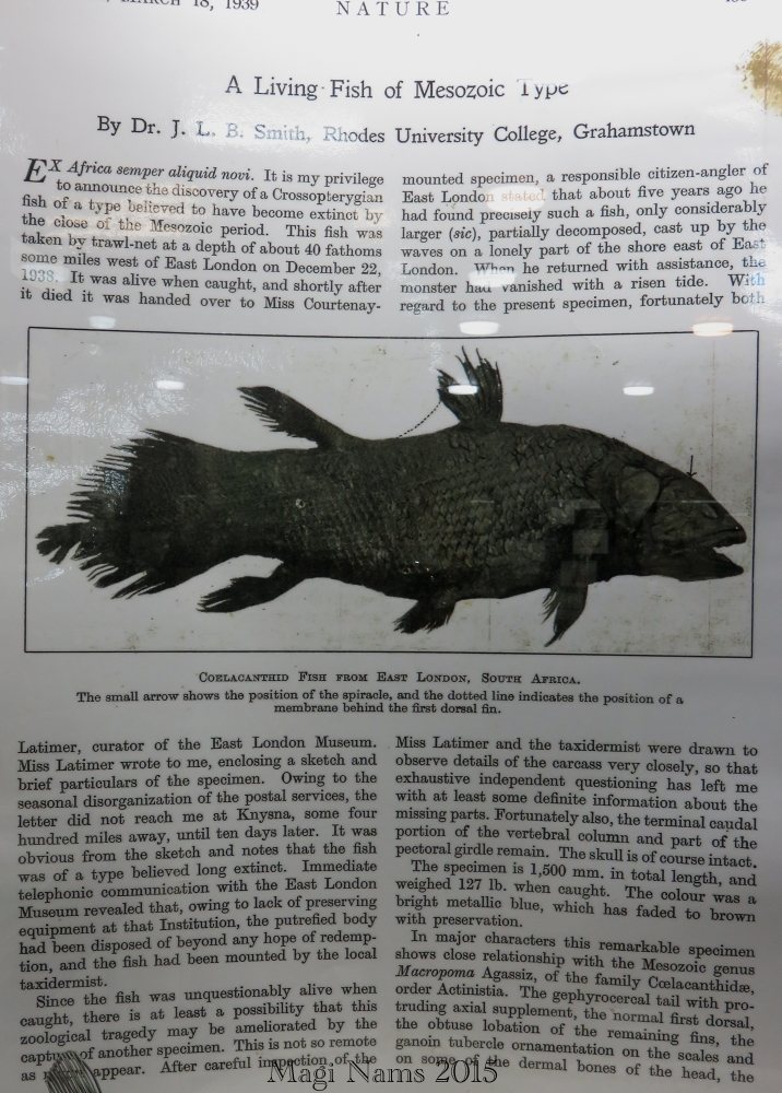 Six Months in South Africa: Marjorie Courtenay-Latimer and the Coelacanth: J.L.B. Smith's Coelacanth Paper in Nature (© Magi Nams)