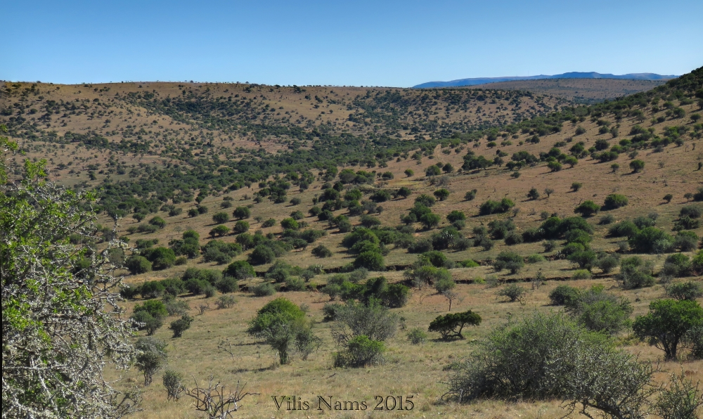 Six Months in South Africa: Coordinated Avifaunal Roadcount: Game Farm in Smaldeel Conservancy (© Vilis Nams)