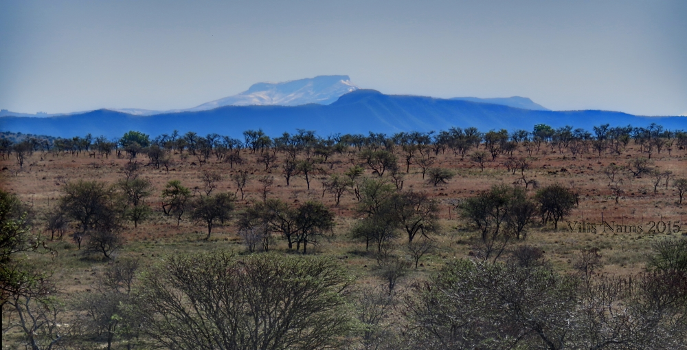 Six Months in South Africa: Coordinated Avifaunal Roadcount: Eastern Cape Veld, with Winterberg (Amathole Mountains) in the background (© Vilis Nams)
