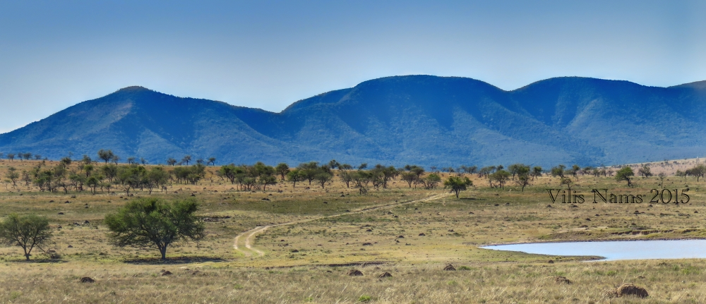 Six Months in South Africa: Coordinated Avifaunal Roadcount: Eastern Cape, South Africa (© Vilis Nams)