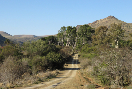 Six Months in South Africa: Birding in Baviaans River Valley: Farm Track at Huntly Glen in Baviaans River Valley (© Magi Nams)