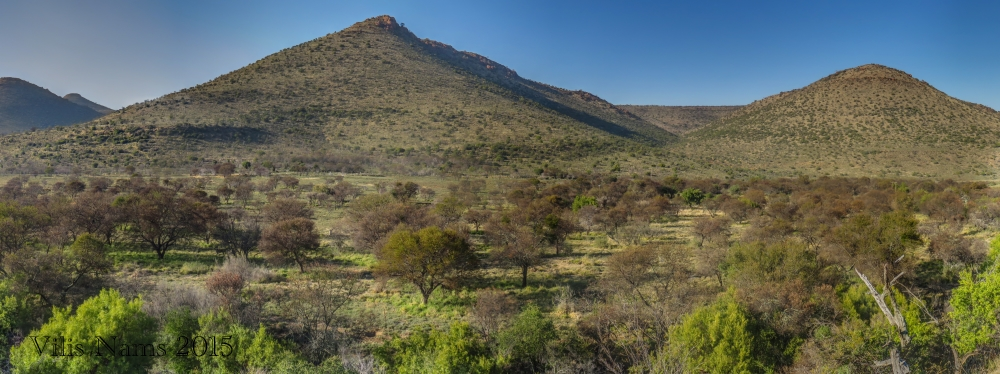 Six Months in South Africa: Birding in Baviaans River Valley: Acacia Thorn Trees in Baviaans River Valley (© Vilis Nams)