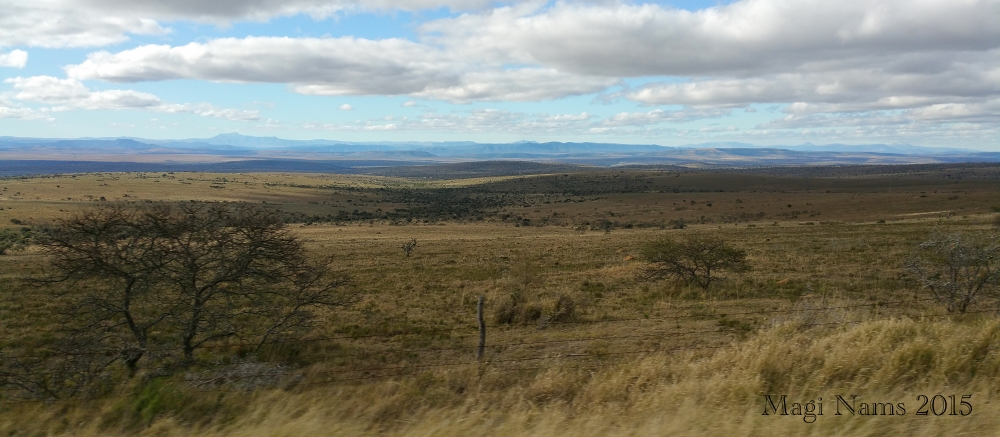 Six Months in South Africa: Birding in Baviaans River Valley: Eastern Cape Veld North of Grahamstown (© Magi Nams)