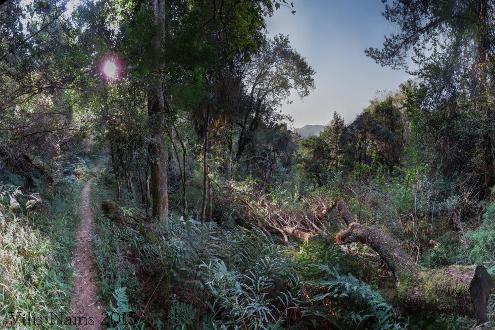 Six Months in South Africa: Hiking at Hogsback: Tor Doone Trail, Hogsback (© Vilis Nams)