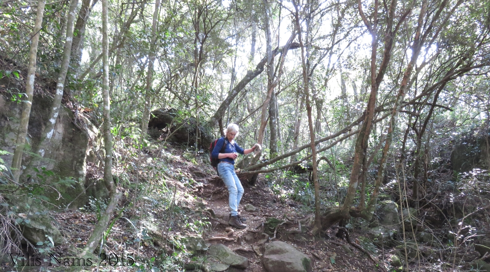 Six Months in South Africa: Hiking at Hogsback: Hiking to Big Tree, Hogsback (© Vilis Nams)