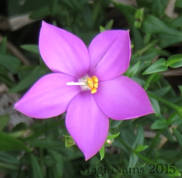 Wildflower (© Magi Nams)