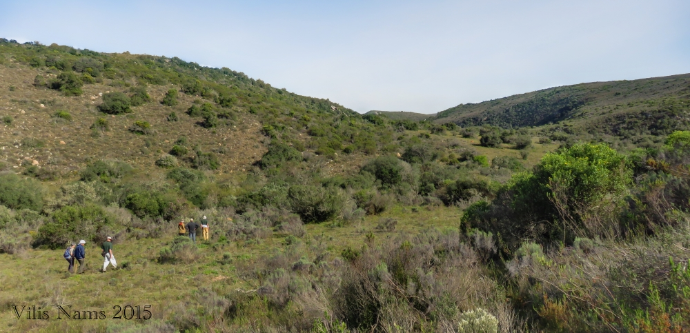 Six Months in South Africa: Birding at Springvale Olive Estate: Birding In Thicket Pasture on Springvale Olive Estate (© Vilis Nams)