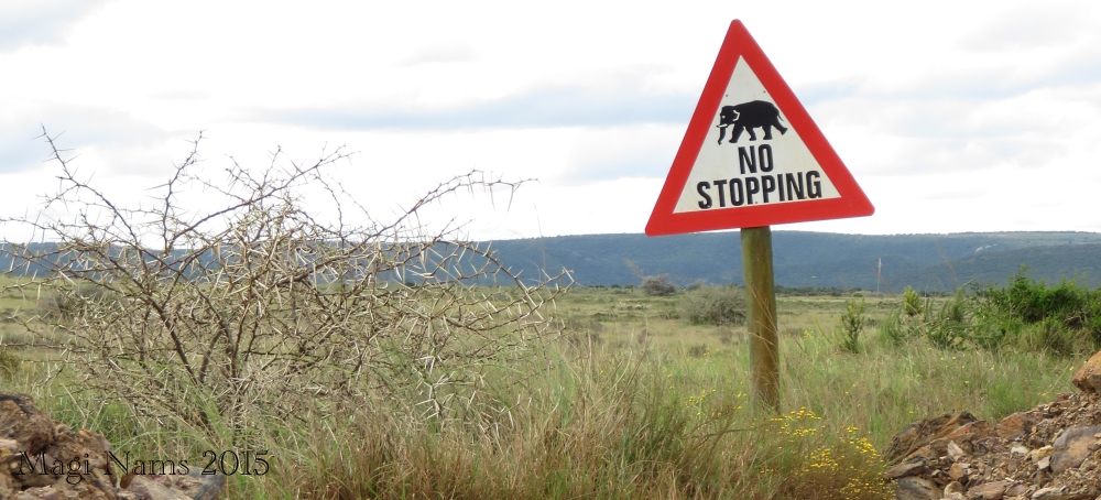 Six Months in South Africa: Poor Man's Game Drive: Wildlife Warning in Shamwari Game Reserve (© Magi Nams)