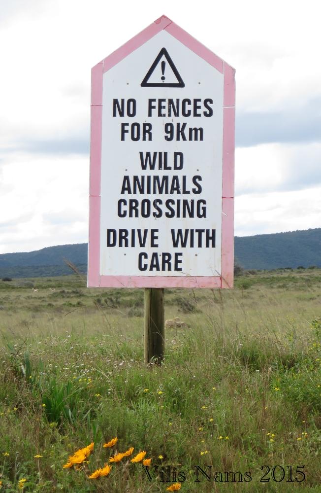 Six Months in South Africa: Poor Man's Game Drive: Road Sign in Shamwari Game Reserve (© Magi Nams)