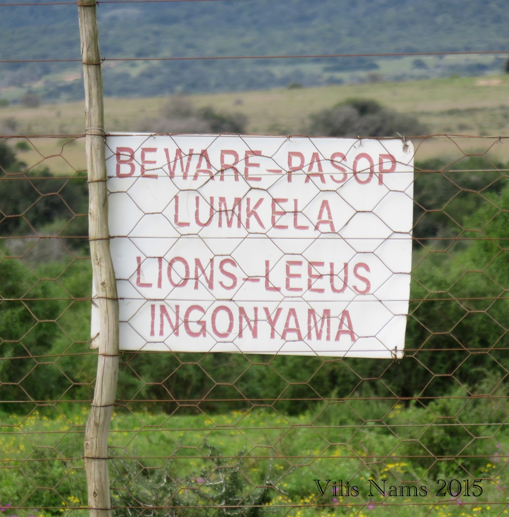 Six Months in South Africa: Poor Man's Game Drive: Lion Warning (© Vilis Nams)