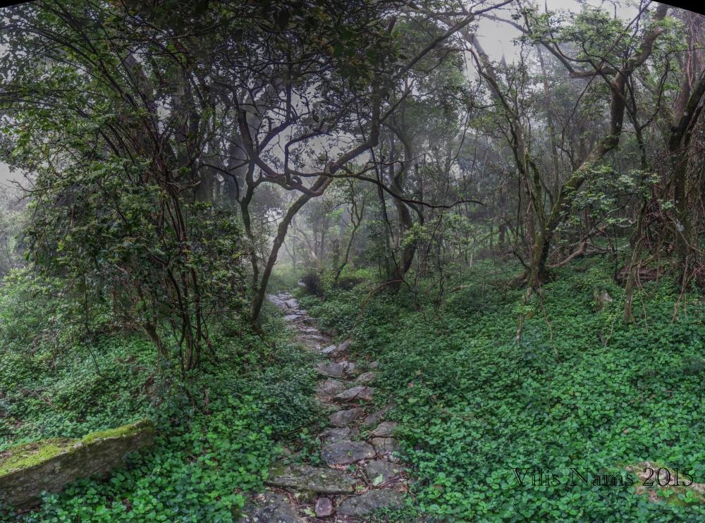 Six Months in South Africa: Dassid Krans in the Mist: Dassie Krans Forest (© Vilisi Nams)