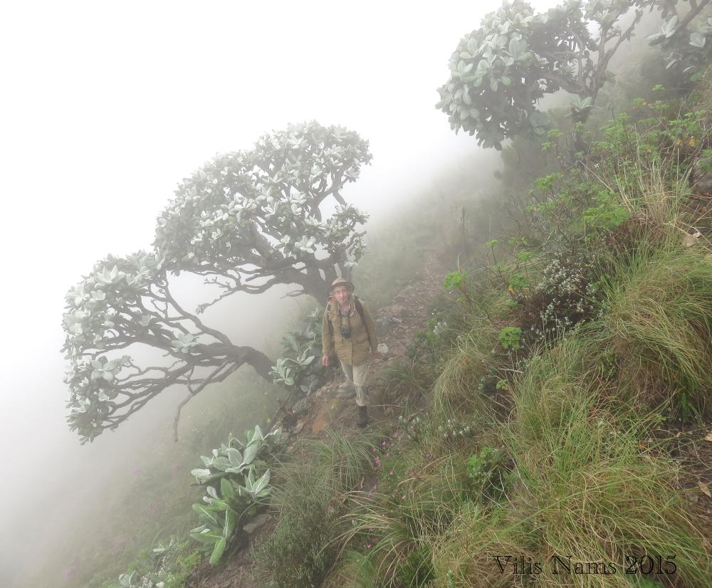 Six Months in South Africa: Dassid Krans in the Mist: On Dassie Krans Trail (© Vilis Nams)