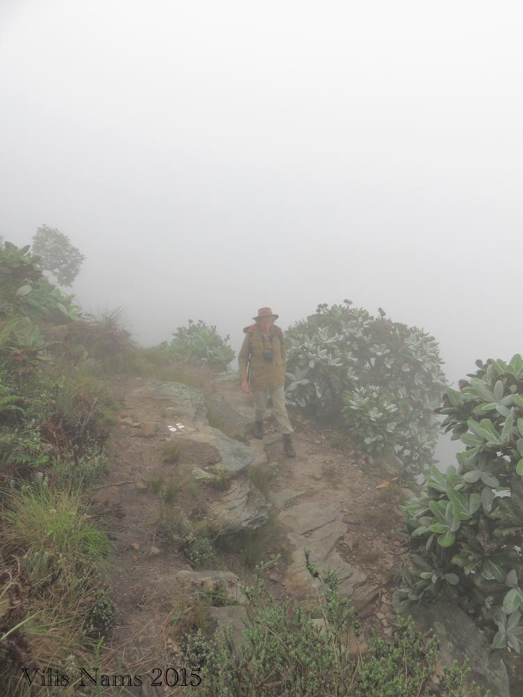 Six Months in South Africa: Dassid Krans in the Mist: Dassie Krans Trail (© Vilis Nams)