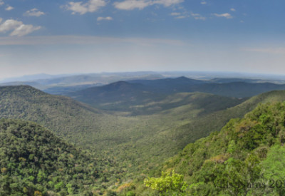 Six Months in South Africa: Hiking in Fort Fordyce Nature Reserve: Afromontane Forest, seen from Bushbuck Trail Lookout, Fort Fordyce Nature Reserve (© Vilis Nams)