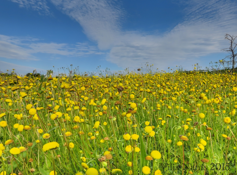 7 Ways to Enrich Your LIfe Through Birding: Spring Wildflowers, Eastern Cape, South Africa (© Vilis Nams)