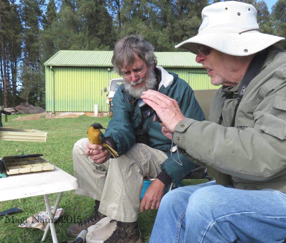 Six Months in South Africa: Spring Birding at Fort Fordyce Nature Reserve: Adrian Craig, Pat Hulley, and Chorister Robin-chat (Cossypha dichroa) (© Magi Nams)