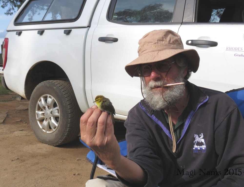 Six Months in South Africa: Spring Birding at Fort Fordyce Nature Reserve: Adrian Craig and Yellow-throated Woodland-warbler (Phylloscopus ruficapilla)(© Magi Nams)