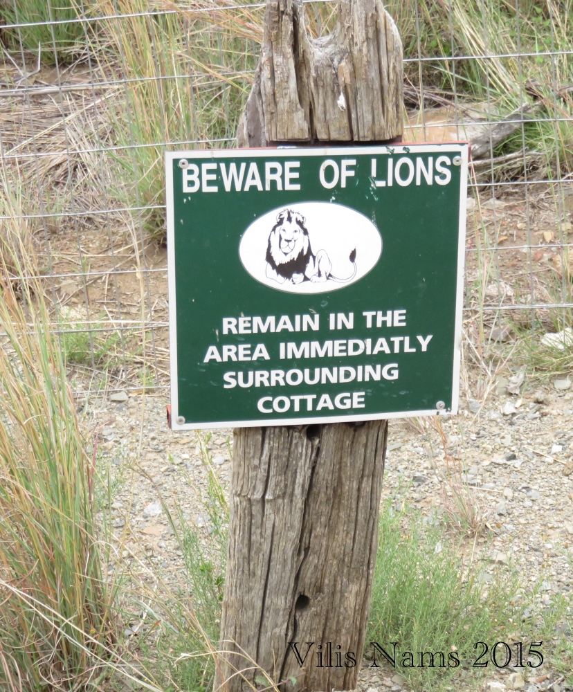 Six Months in South Africa: Mountain Zebra National Park: Lion Warning (© Vilis Nams)
