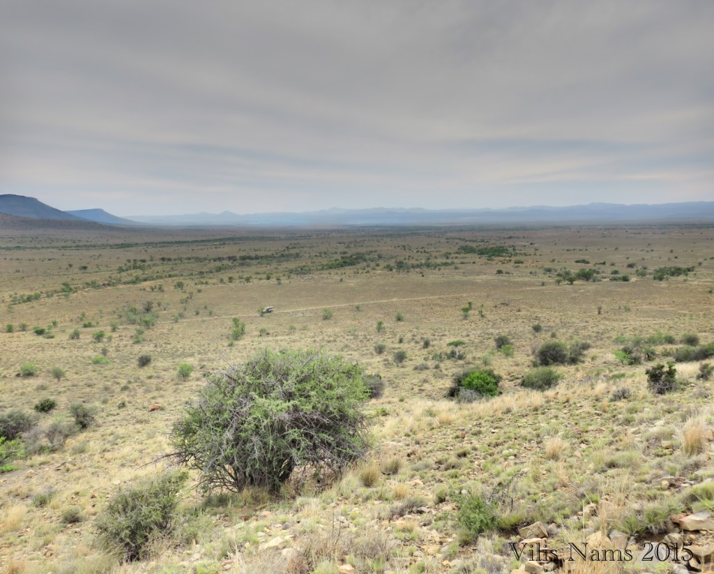 Six Months in South Africa: Mountain Zebra National Park: Can you spot the cheetah under the big bush? (© Vilis Nams)