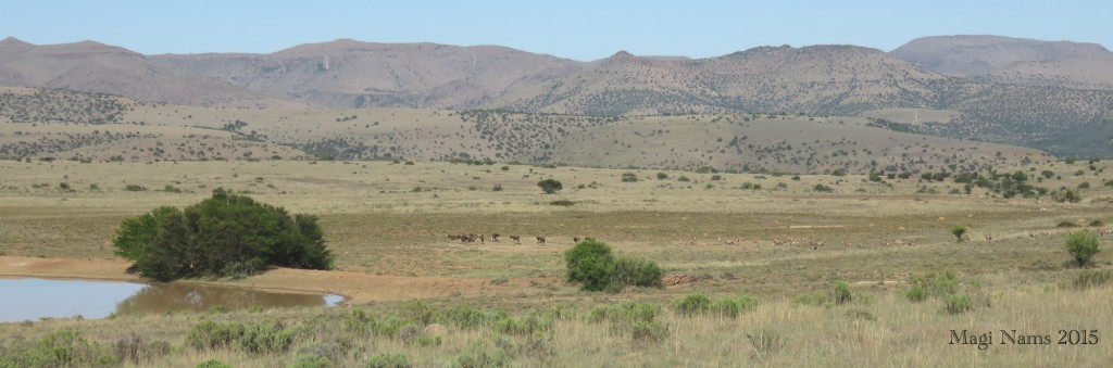 Game on Rooiplat plain, Mountain Zebra National Park (© Magi Nams)