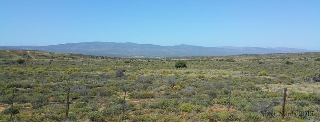 Six Months in South Africa: Klein Karoo: Klein Karoo Rangeland near Oudtshoorn (© Magi Nams)