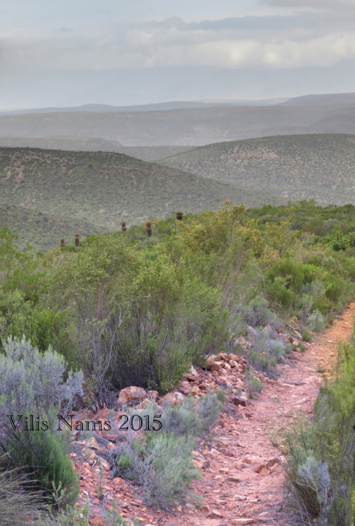 Six Months in South Africa: Klein Karoo: Klein Karoo Hiking Track (© Vilis Nams)