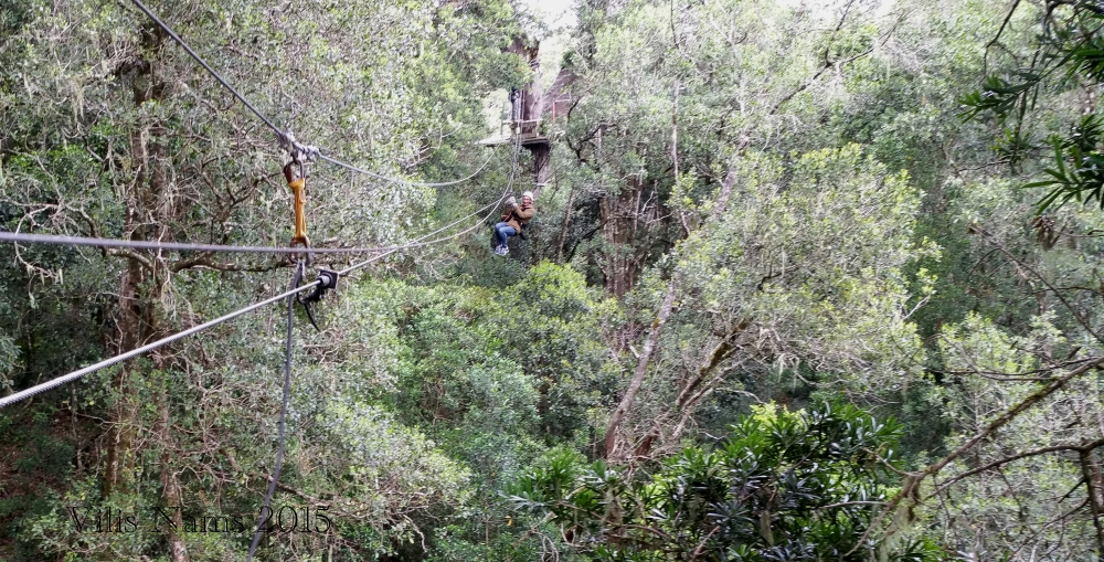 Six Months in South Africa: Tsitsikamma Forest Canopy Tour: And gliding through gorgeous indigenous South African forest. (© Vilis Nams)