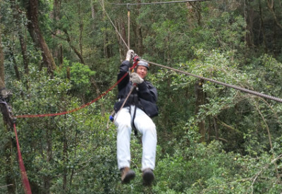 Six Months in South Africa: Tsitsikamma Forest Canopy Tour: Tsitsikamma Forest treetops (© Magi Nams)