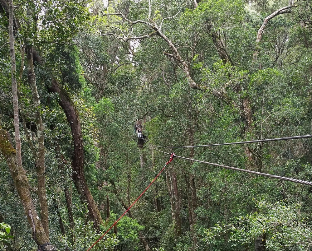 Six Months in South Africa: Tsitsikamma Forest Canopy Tour: Vilis waiting to launch onto 91-metre zip line (© Magi Nams)