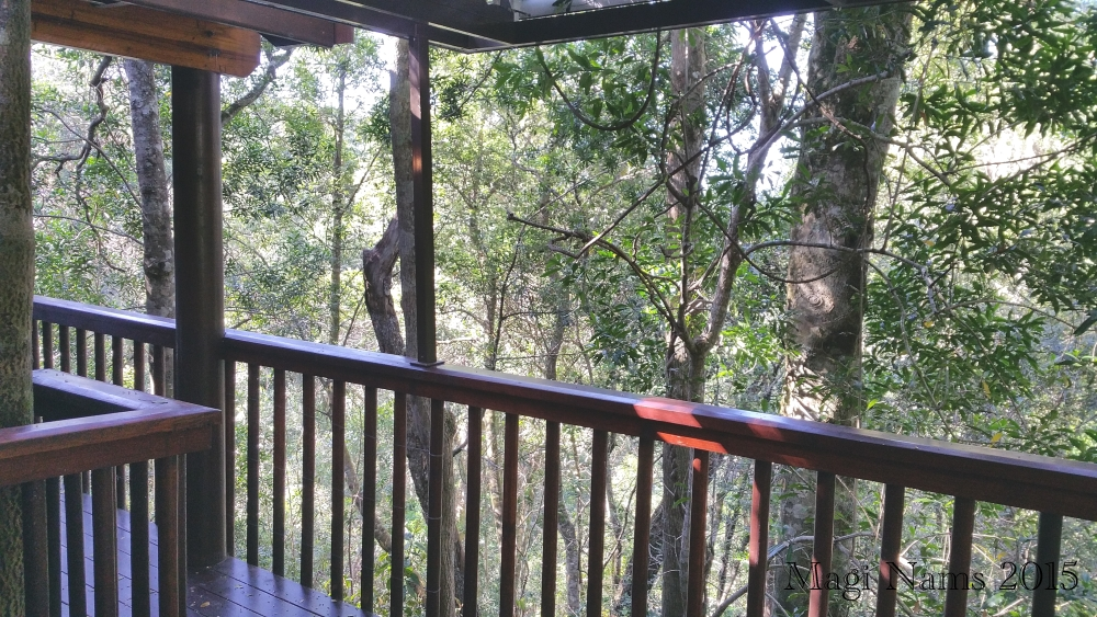 Six Months in South Africa: Tsitsikamma Forest Canopy Tour: Treetop Chalet Deck View (© Magi Nams)