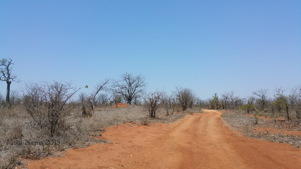 Six Months in South Africa: Kruger National Park: Drought-stricken Kruger National Park (© Magi Nams)