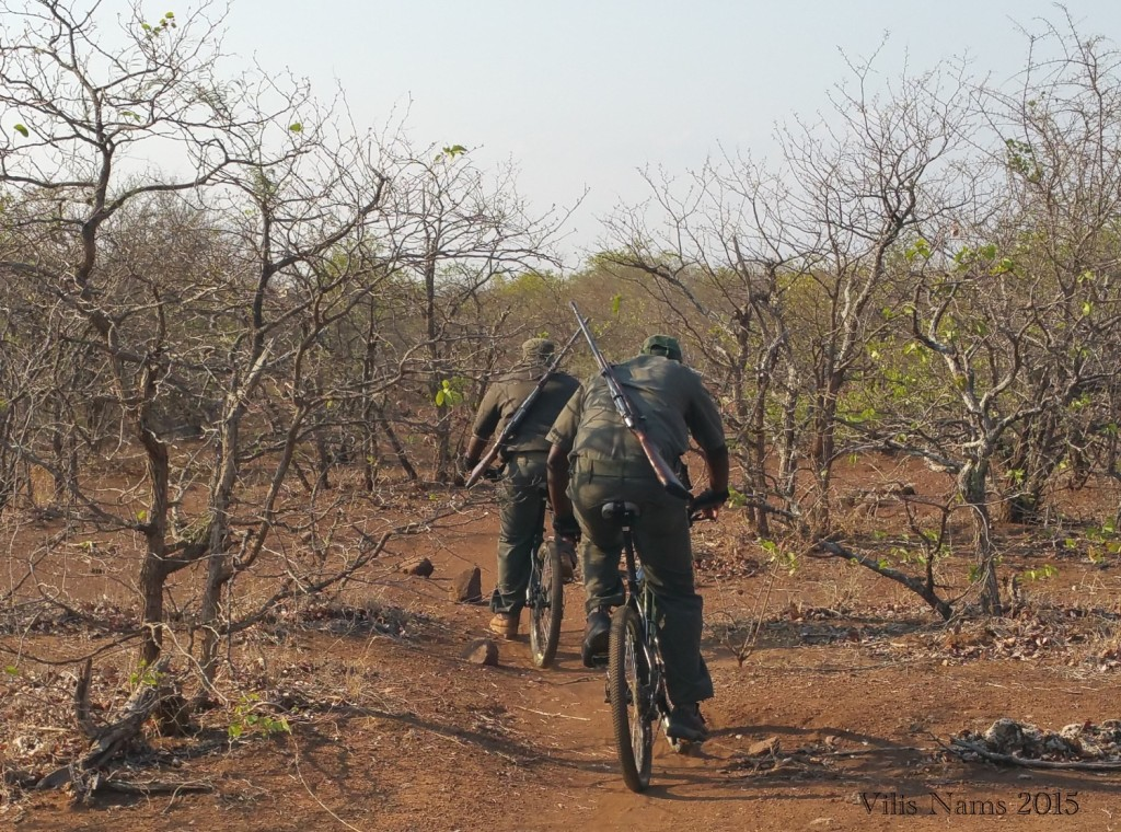 Six Months in South Africa: Kruger National Park: Mountain Biking Guides (© Vilis Nams)