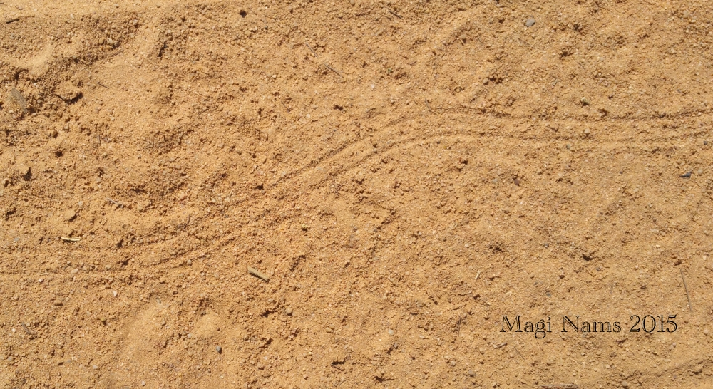 Reading African Animal Tracks and Sign: Millipede Trail (© Magi Nams)