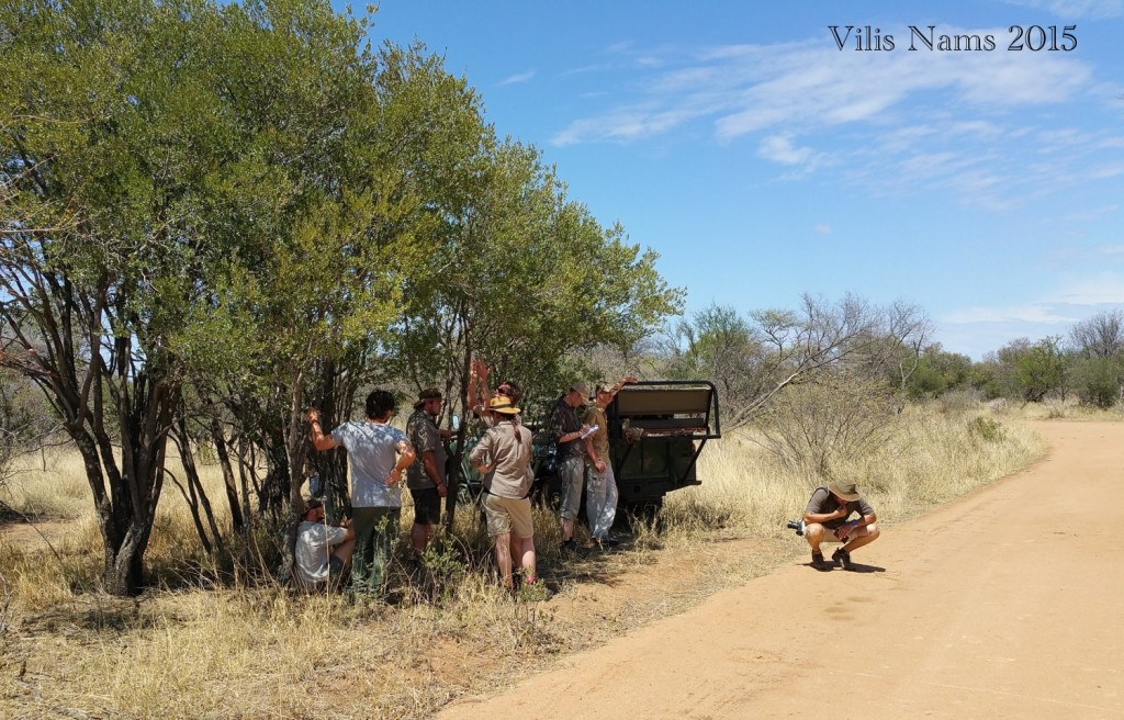 Six Months in South Africa: Tracking Wildlife in Limpopo: Waiting in the shade for everyone to finish reporting. (© Magi Nams)