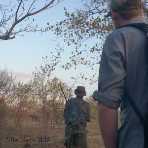 Six Months in South Africa: Kruger National Park: Early Morning Elephant Encounter (© Vilis Nams)