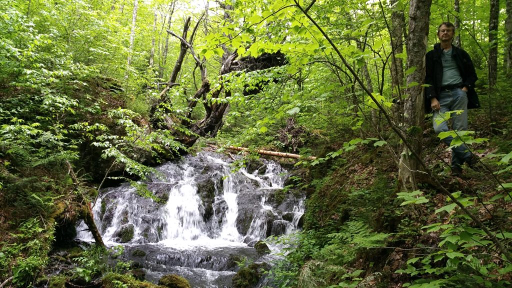 Hiking in Canada: Gully Lake Wilderness Area, Nova Scotia: At Donald's Falls (© Magi Nams)