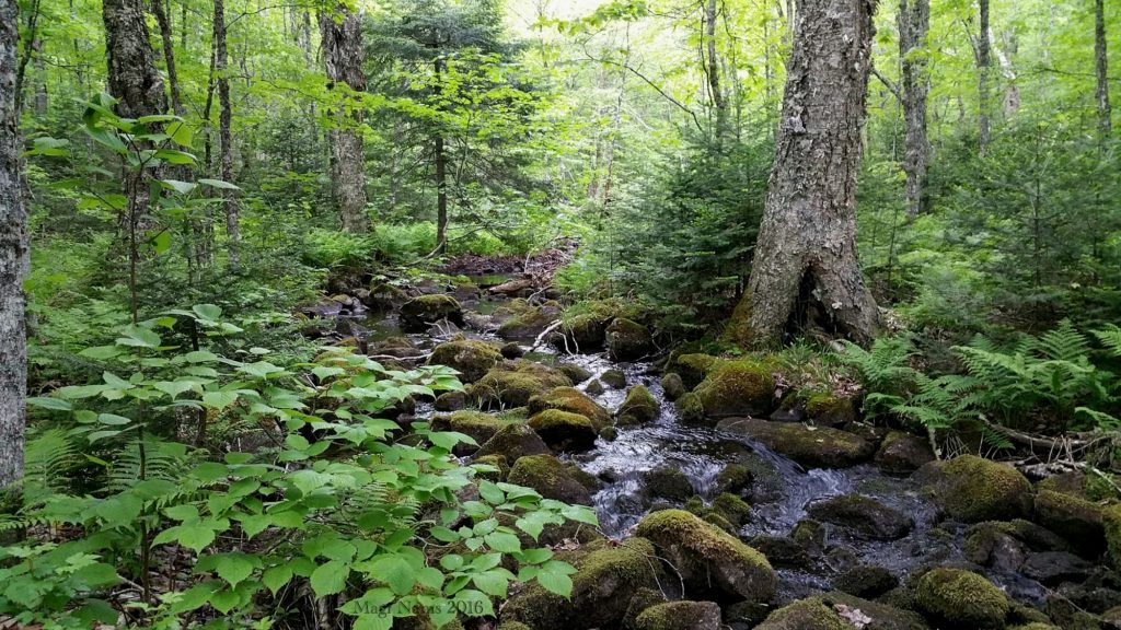 Hiking in Canada: Gully Lake Wilderness Area, Nova Scotia: White's Brook, Sandy Cope Lake Trail (© Magi Nams)