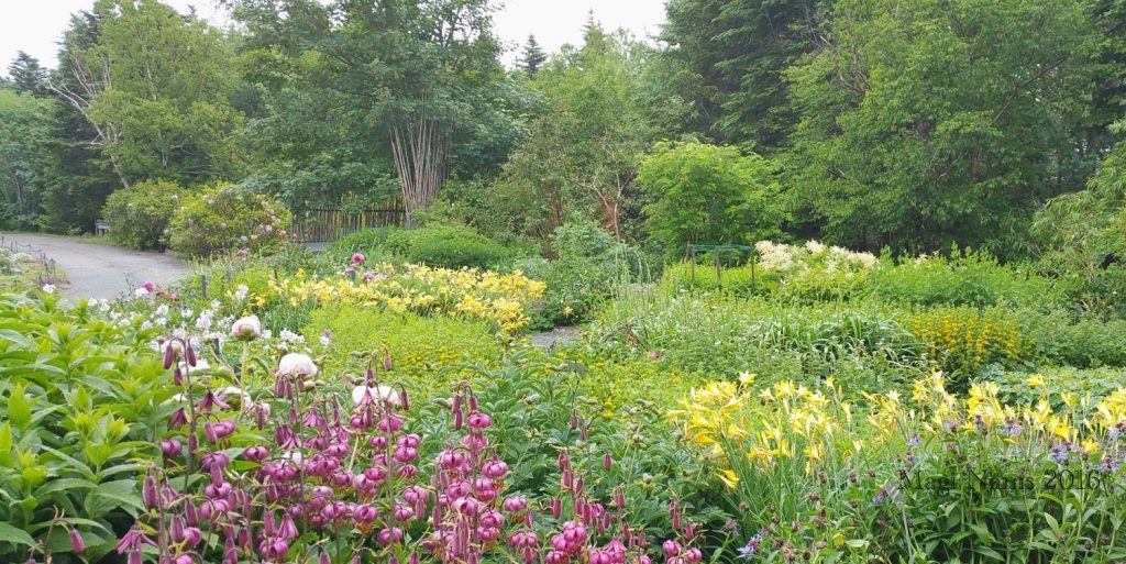 Exploring Canada: St. John's, Newfoundland and Labrador – City on the Eastern Tip of North America: Memorial University of Newfoundland Botanical Garden (© Magi Nams)(