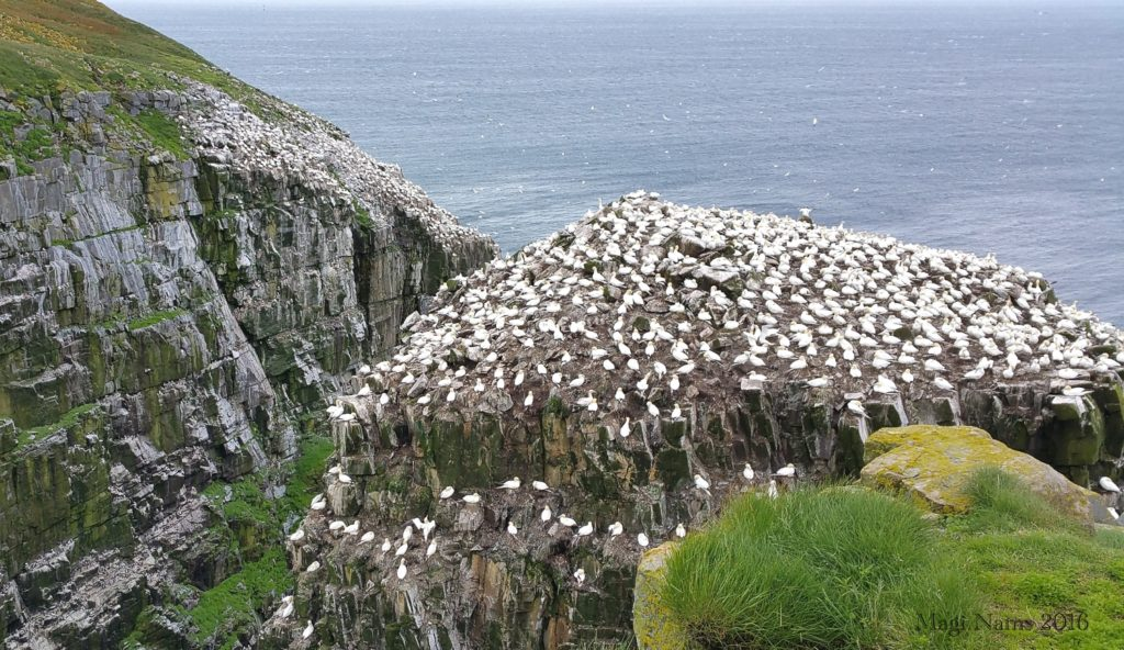 Cape St. Mary's Ecological Reserve: Bird Rock on a clear day, Cape St. Mary's Ecological Reserve (© Magi Nams)