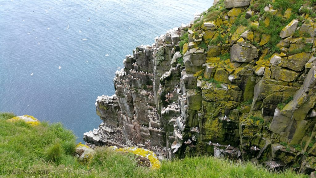 Cape St. Mary's Ecological Reserve: Seabird Colony, Cape St. Mary's, Newfoundland and Labrador (© Magi Nams)