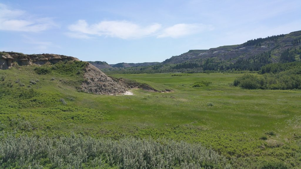 Hiking in Canada: Dry Island Buffalo Jump Provincial Park, Alberta: Silverberry Thicket and Native Prairie Grassland in Dry Island Buffalo Jump Provincial Park (©Vilis Nams)