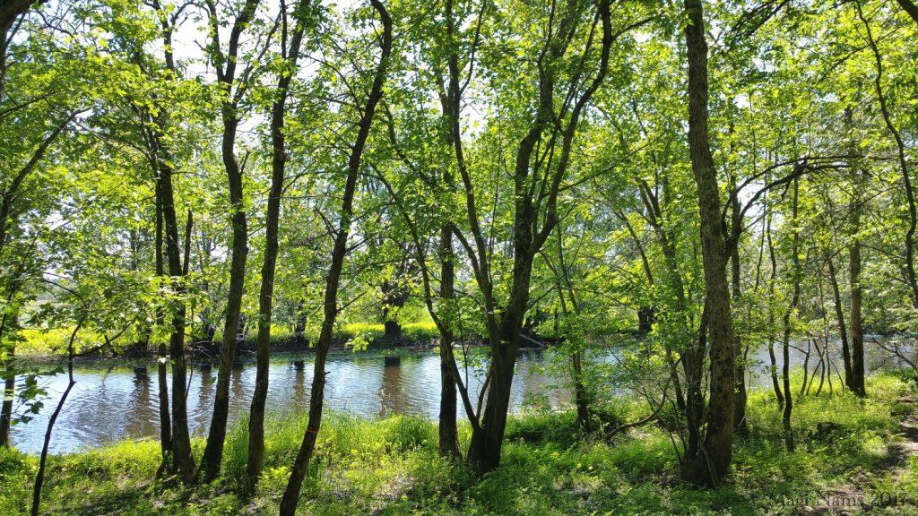 Hammond River Park: Hammond River seen from Hammond River Park (©Magi Nams)