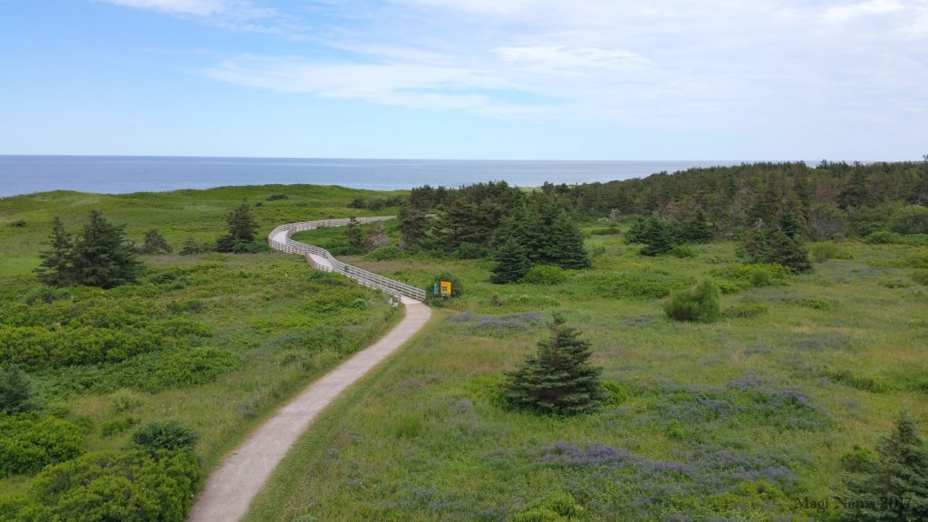 Images from Prince Edward Island: Boardwalk in Greenwich Section, Prince Edward Island National Park (©Magi Nams)