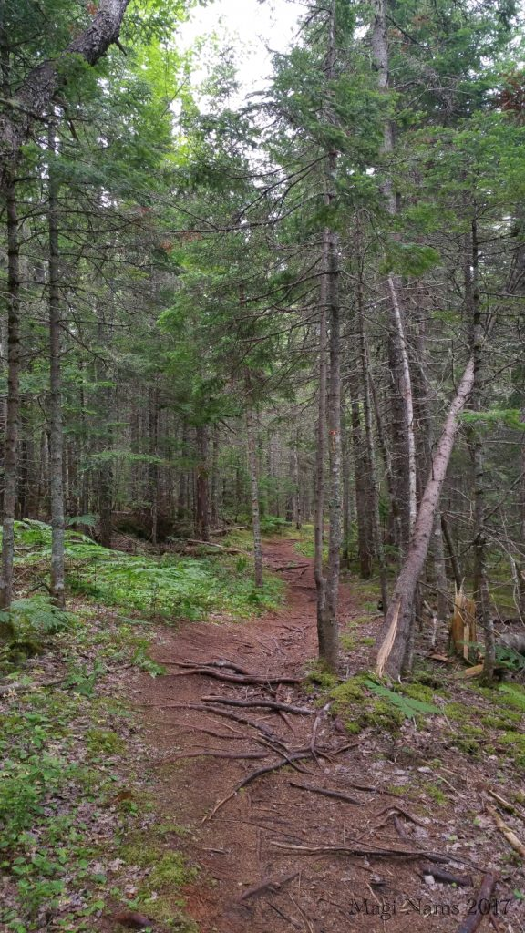 Hiking in Canada: Gairloch Road Trail, Prince Edward Island (© Magi Nams)