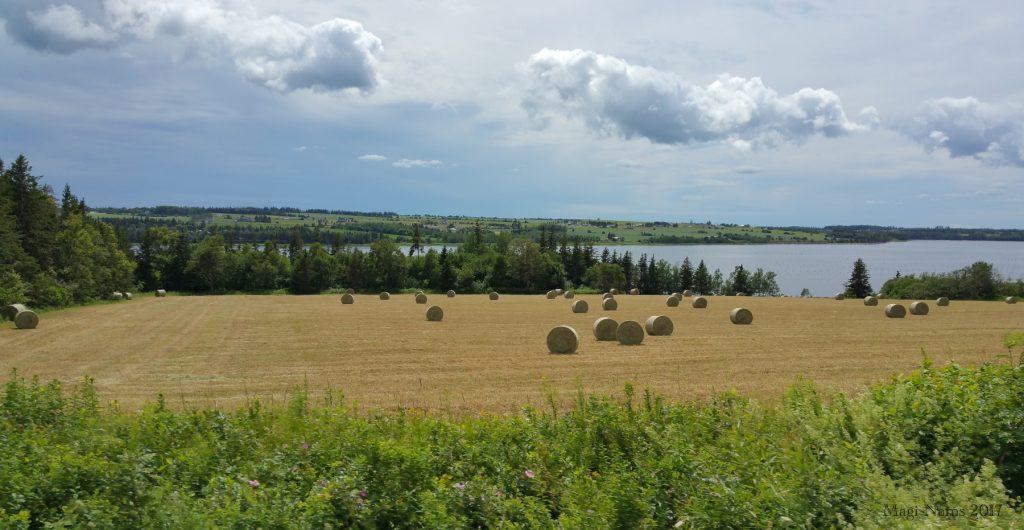 Images from Prince Edward Island: Hayfield near St. Peters Bay, Prince Edward Island (©Magi Nams)